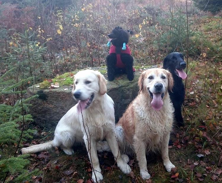 Fire hunder
